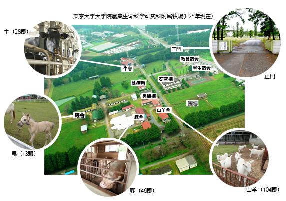 東京大学大学院農業生命科学研究科附属牧場(H28年現在)